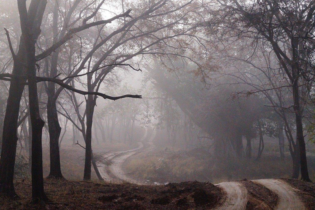 Pfad durch den Nebel – Die Überarbeitung von »Nebelritter«